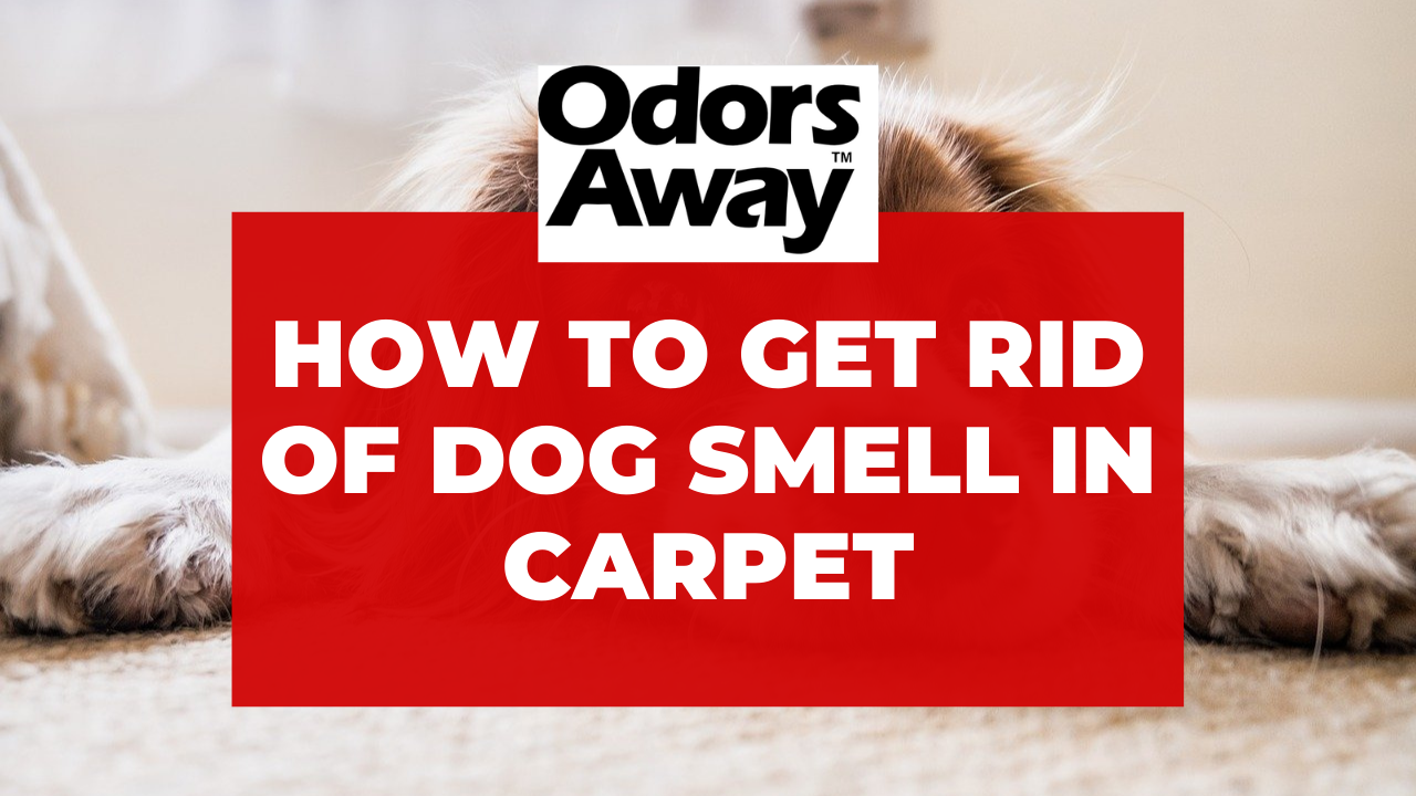 Get Rid of Dog Smell in Carpet